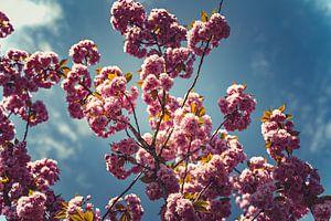 Blüten rosa 08