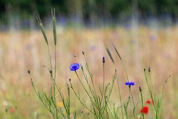 voorjaars bloemen van ton vogels