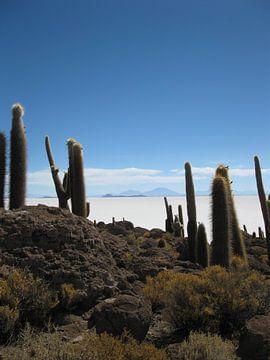 Salt Flats of Uyuni in Bolivia von Bart Muller
