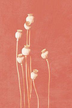 Papaver, botanische print koraal roze van Joske Kempink