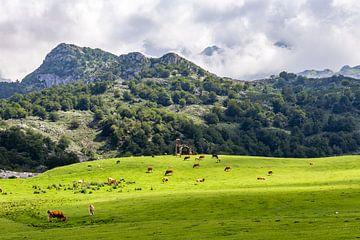 Weiland met koeien en kapel in Picos de Europa van Easycopters