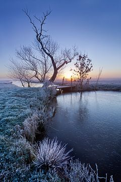 Frosty morning van Halma Fotografie