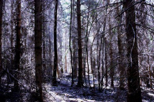 Forest of Fairies van