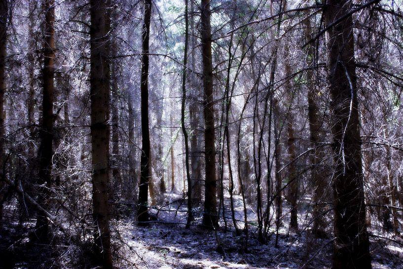 Forest of Fairies van Forestia Arts