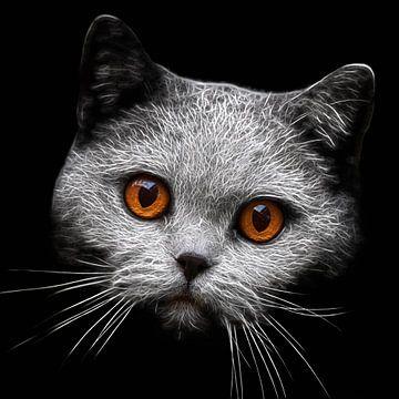 Blick-Duell mit einer Katze sur Lars van de Goor