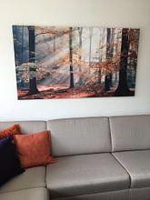 Kundenfoto: Sinfonia Della Foresta 2 von Lars van de Goor, auf leinwand