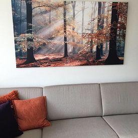 Kundenfoto: Sinfonia Della Foresta - Herbstwald von Lars van de Goor