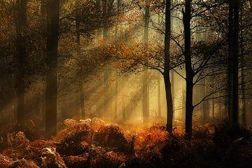 Herfst in het Liesbos van Jos Erkamp