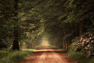 Wanderlust. sur Inge Bovens