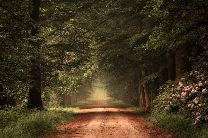 Wanderlust. van Inge Bovens