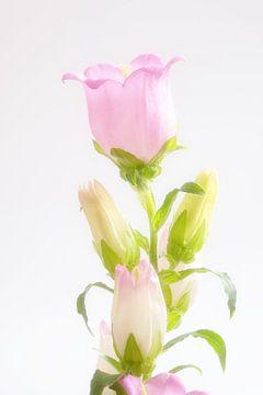 bloem van Hilda booy