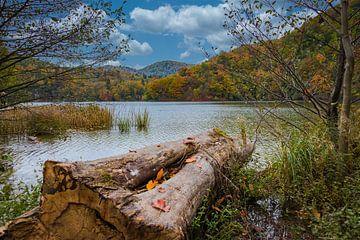 Aan de waterkant, Plitvice Nationaal Park, Kroatië van Rietje Bulthuis