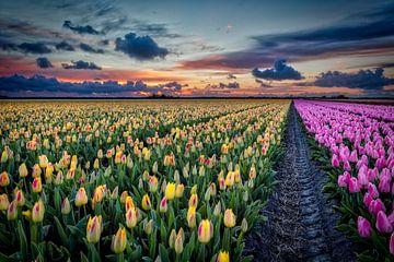 Hol dir den Frühling ins Haus! von eric van der eijk
