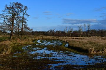 Nat land in het natuurgebied Kampsheide van Bernard van Zwol