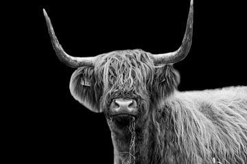 Schottischer Highlander von Esther van Engen