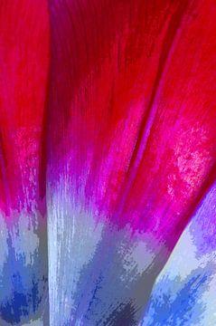 Tulip in Red & Blue van De Rover