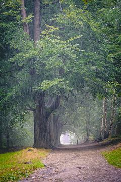 Rainy Forest van Marc Glaudemans