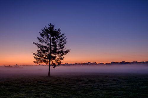 The tree at sunrise