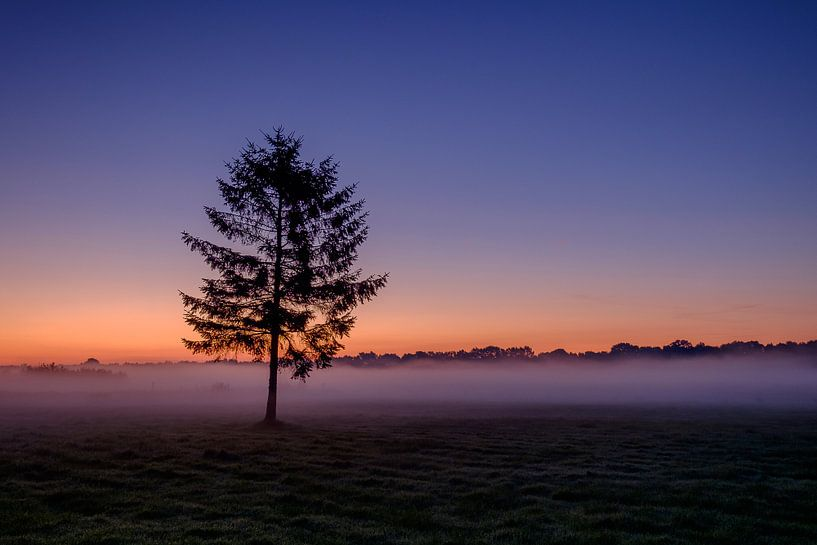 The tree at sunrise van Koos de Wit