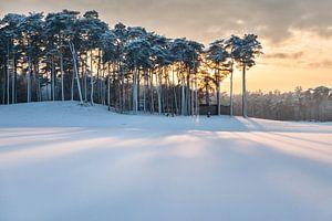 Winter Wonderland van Portrait of Holland