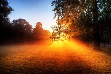 Vondelpark ochtendzon van Dennis van de Water
