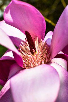 rooskleurige bloesem van Nadine Rall