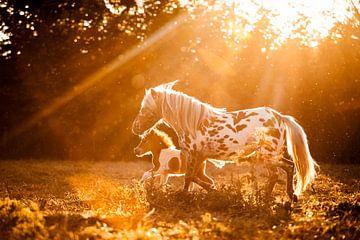Shetlandpony mit Fohlen in der Sommersonne von Lotte van Alderen