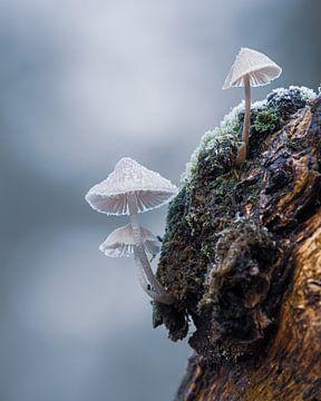 paddenstoel in winter van eric brouwer