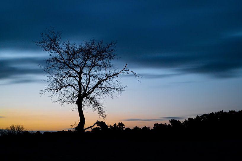 Silhouet van een boom van Mark Bolijn