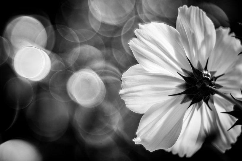 Blume von Udo Wanninger limitiete Auflage