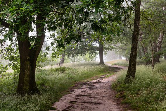 Curvy Path Into The Fog van William Mevissen