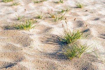 Kleine graspollen in het zand van Ruud Morijn
