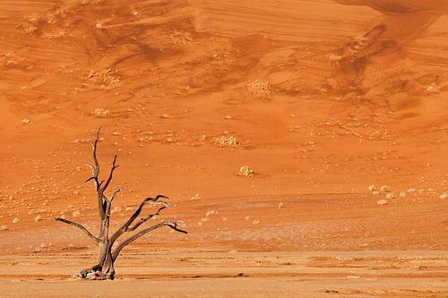 Dead tree in the Deadvlei