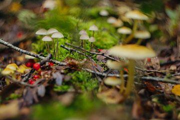 Herfst van Wolbert Erich