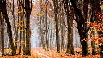 Forêt de Neldoreth sur Tvurk Photography