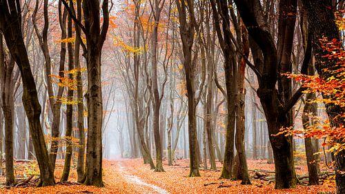 Wald von Neldoreth von Tvurk Photography