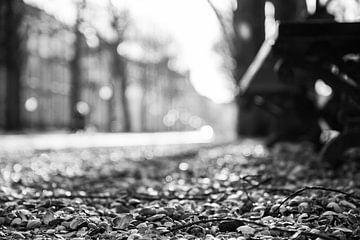 Schelpenpad met bankje op het Lange Voorhout, Den Haag in zwart wit van Wouter Kouwenberg