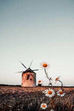 Windmolen in het veld. Landschap shot van Tez met madeliefjes van Fotos by Jan Wehnert