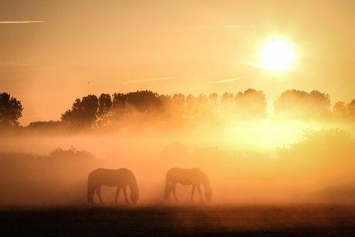 Mistige morgen von Raymond Zonneveld