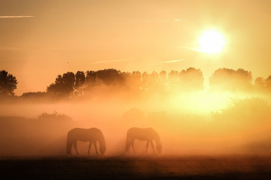 Mistige morgen van Raymond Zonneveld