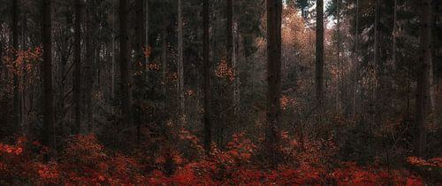 Autumn Dreams (1/4)  van