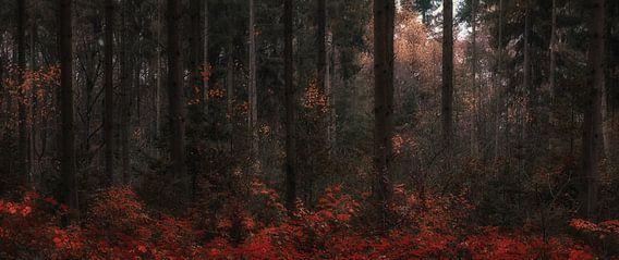 Autumn Dreams (1/4)