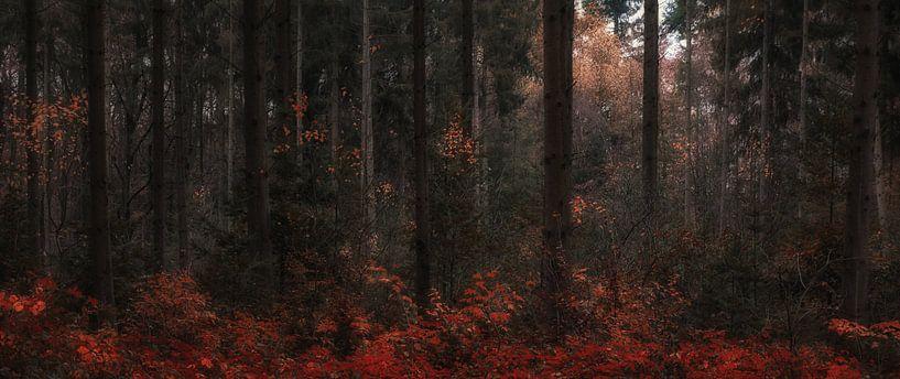 Autumn Dreams (1/4)  van Remco Lefers