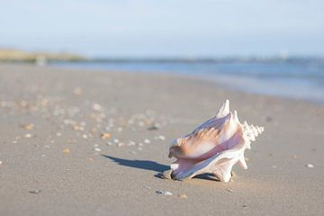 Big shell sur Clazien Boot