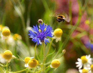 Wildblumen im Frühling von Alice's Pictures