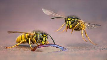 Wespen van Arno van Zon
