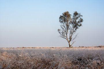 Koude morgen van Maarten Kooij