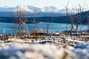 Straumsfjorden van