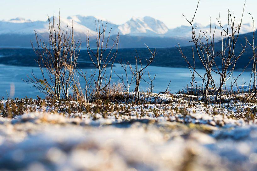 Straumsfjorden van Ilse Hofman