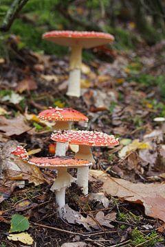 Herfst paddenstoel van Peter Hullegien